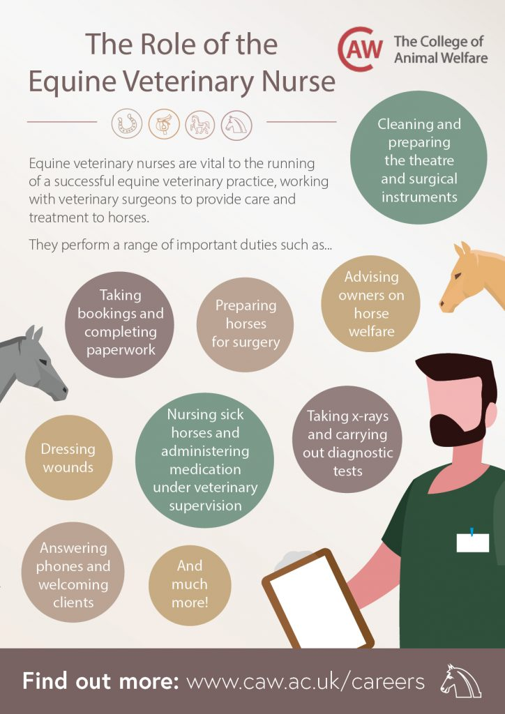 The Role of the Equine Veterinary Nurse Poster