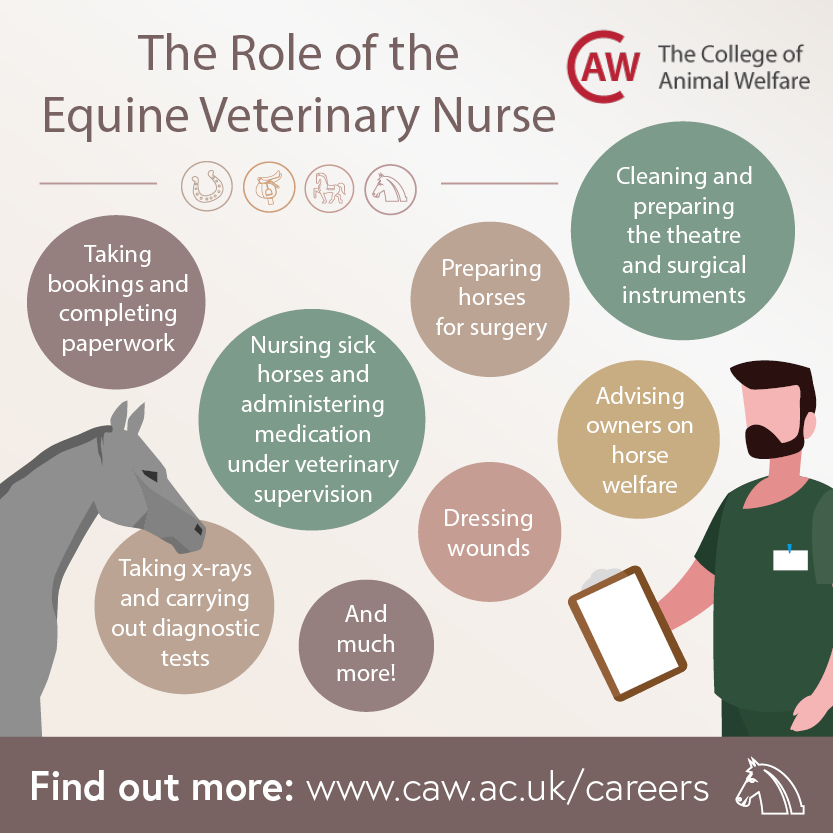 The Role of the Equine Veterinary Nurse Social Image