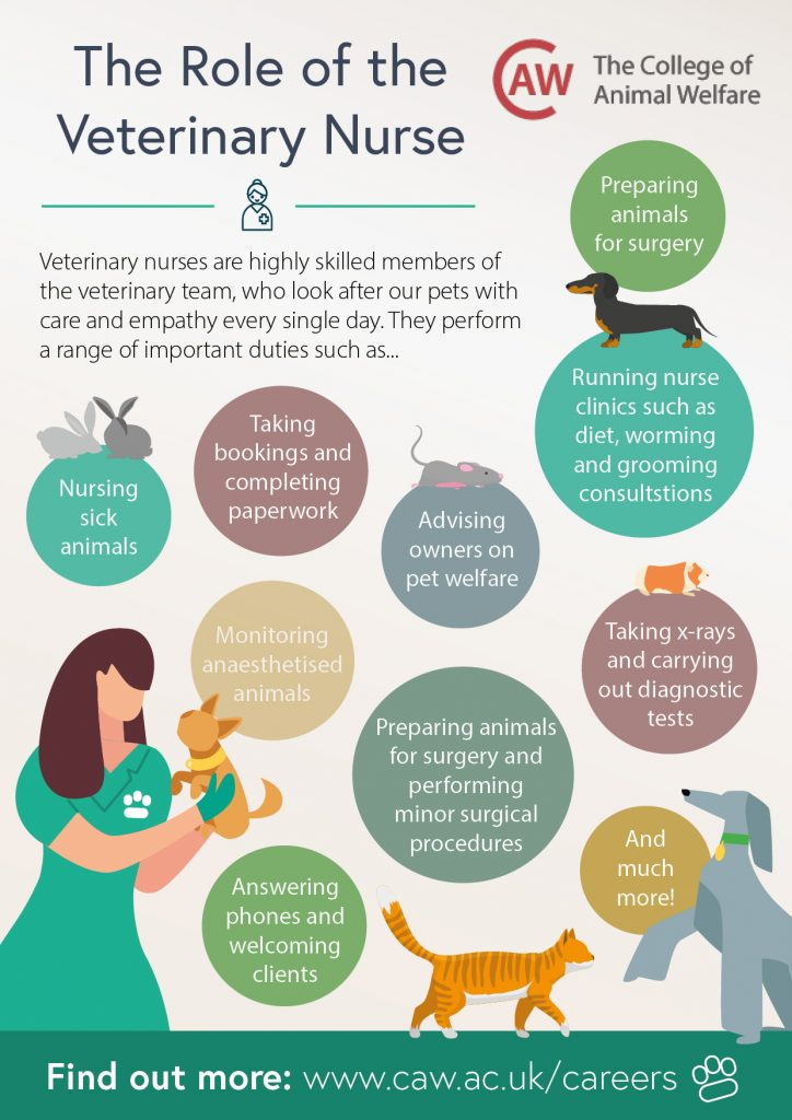 The Role of the Veterinary Nurse Poster