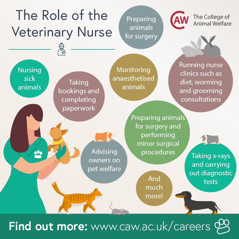 The Role of the Veterinary Nurse Social Image
