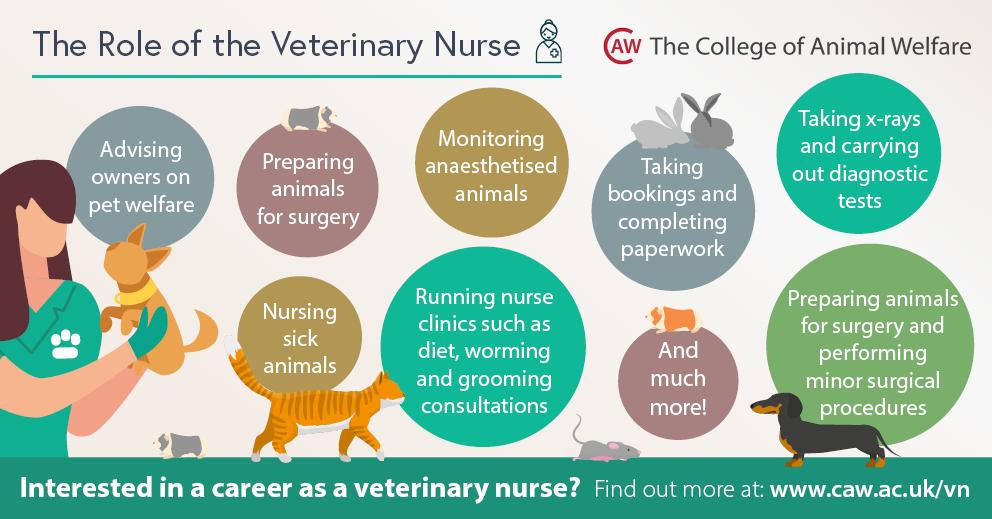 Veterinary Nurse Job Role Social Media Image - Rectangle