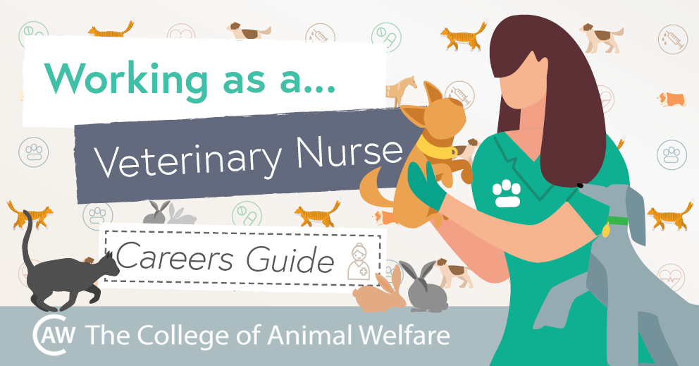 Veterinary Nursing Careers Guide