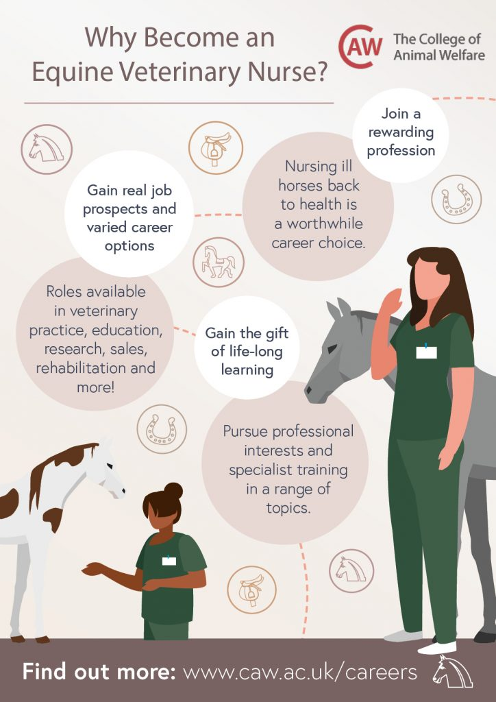 Why Become an Equine Veterinary Nurse Poster