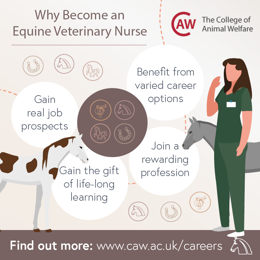 Why Become an Equine Veterinary Nurse Social Image