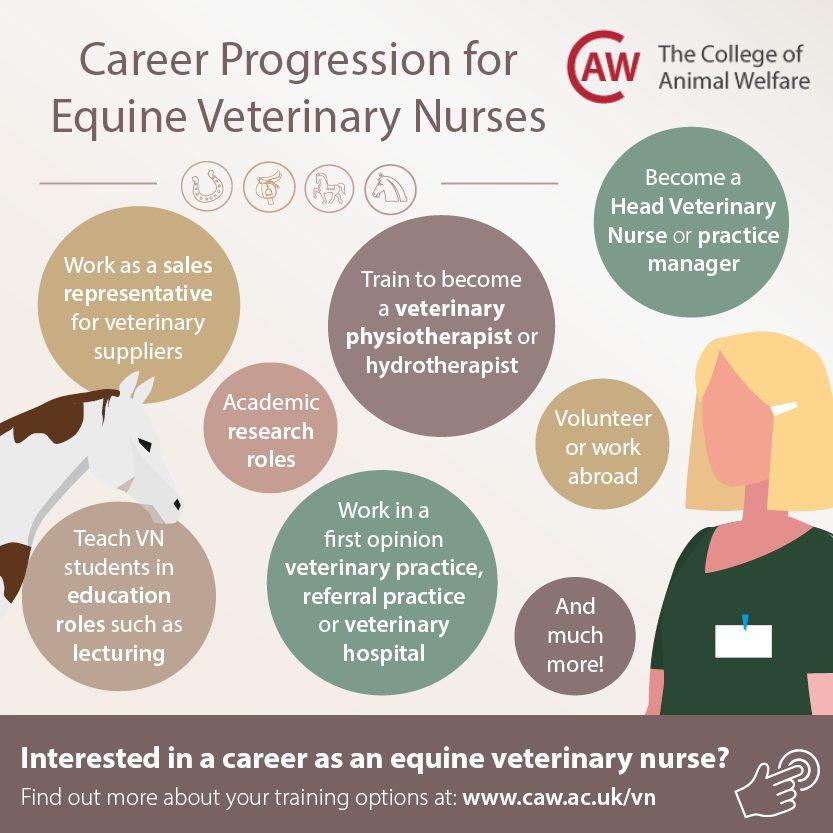 Career Progression for Equine Veterinary Nurses Social Media Image - Square