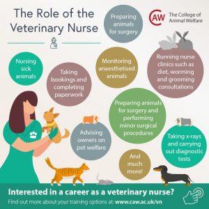 Veterinary Nurse Job Role Social Media Image - Square
