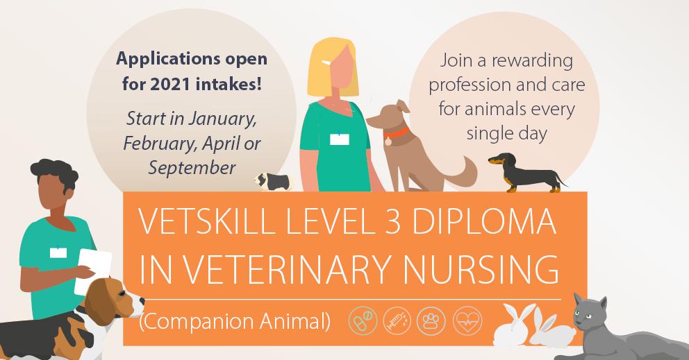 Vetskill Level 3 Diploma In Veterinary Nursing Caw