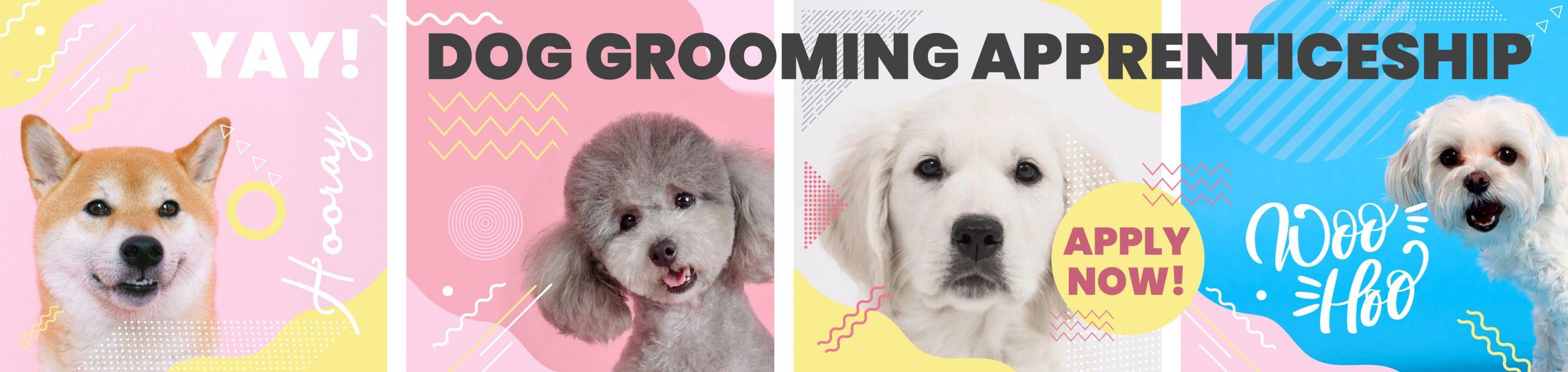 Course: Dog Groomer Level 2 Apprenticeship