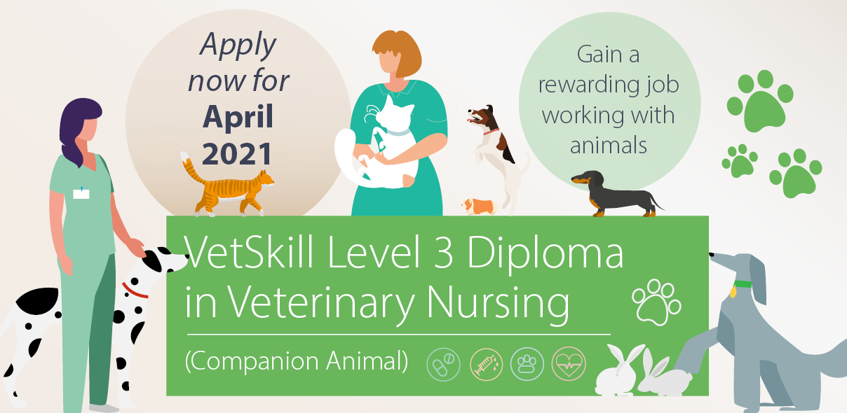 Veterinary Nursing Level 3 course starting in January 2021