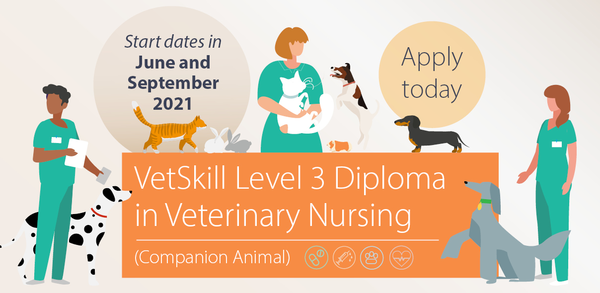 Start studying the Level 3 Diploma in Veterinary Nursing in June and September 2021