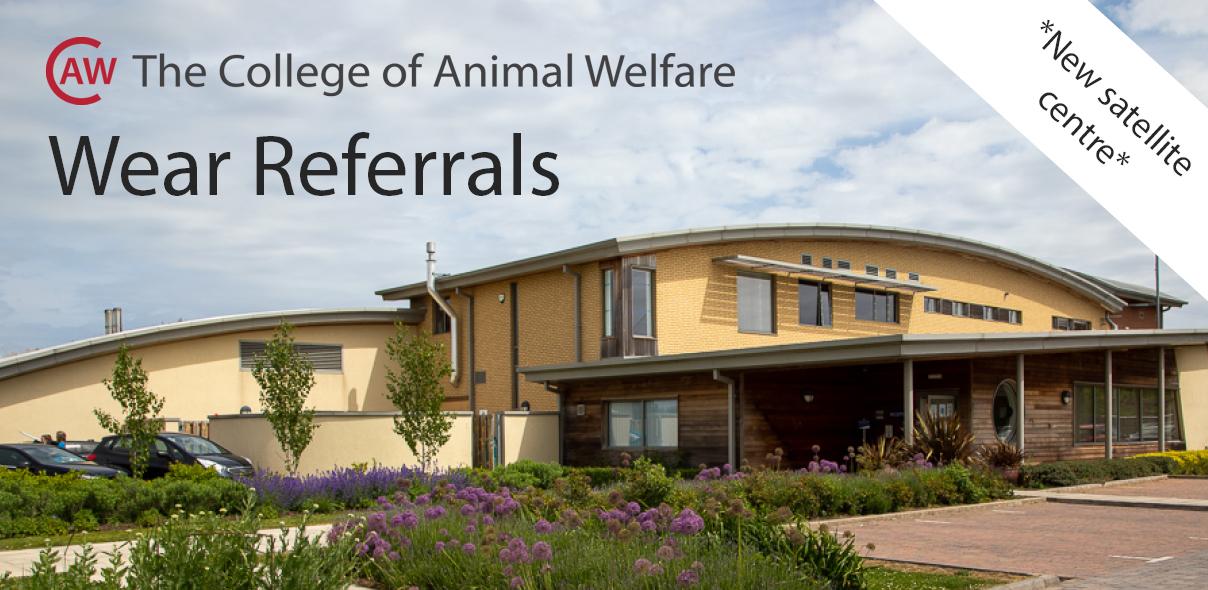 CAW Veterinary Nurse Training at Wear Referrals