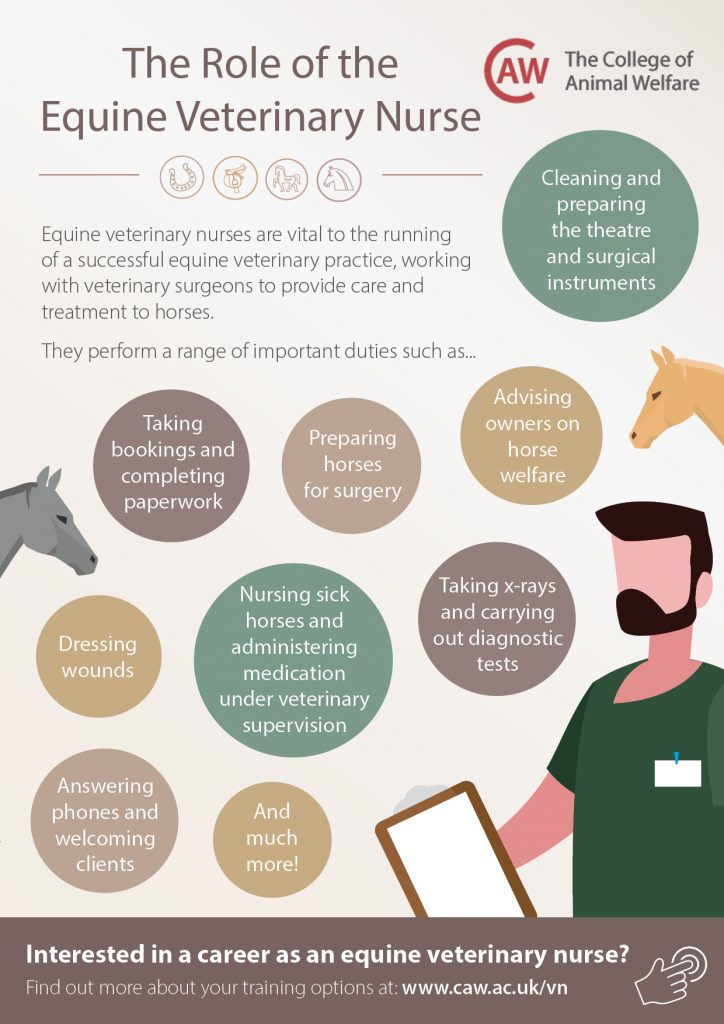 Equine Veterinary Nurse Job Profile