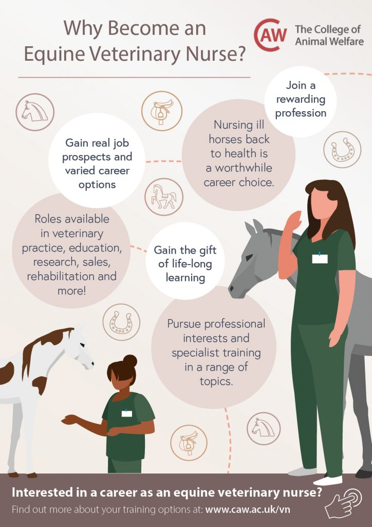 Why Become an Equine Veterinary Nurse