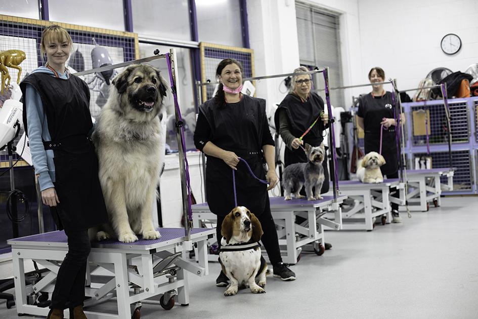 Dog Grooming Huntingdon