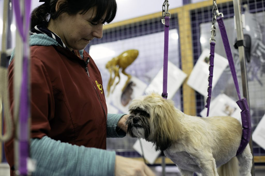 Dog grooming Wigan