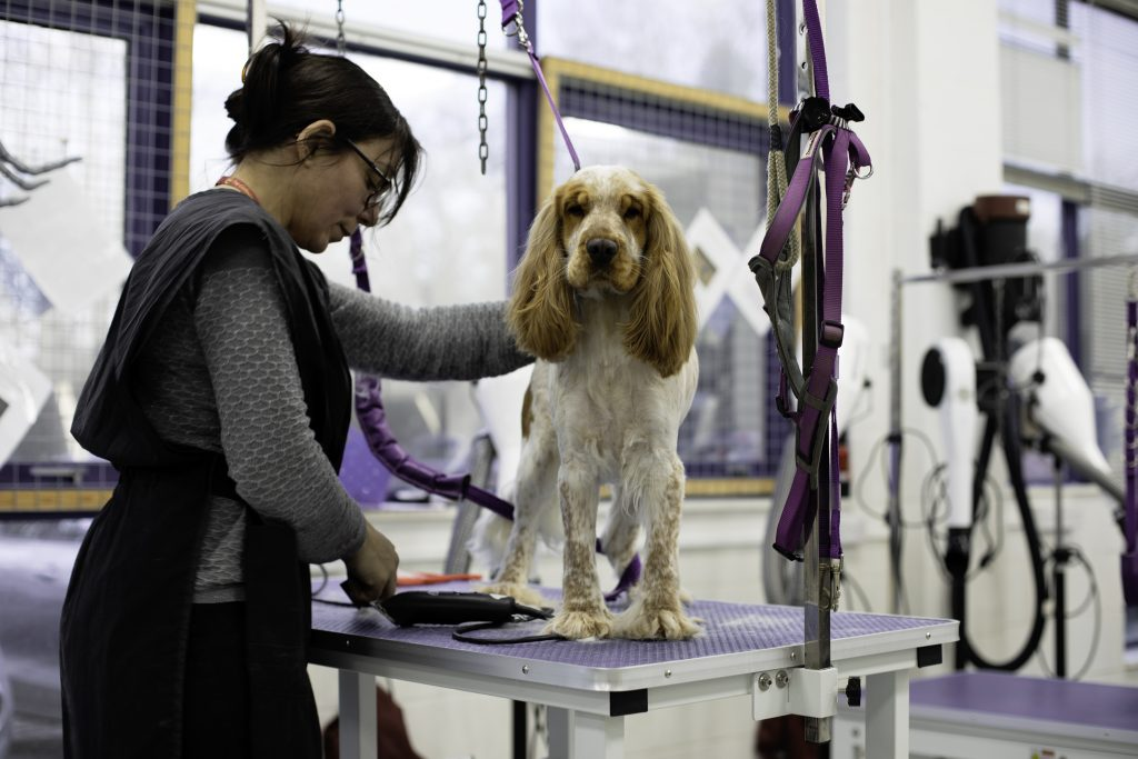 Dog Grooming North London