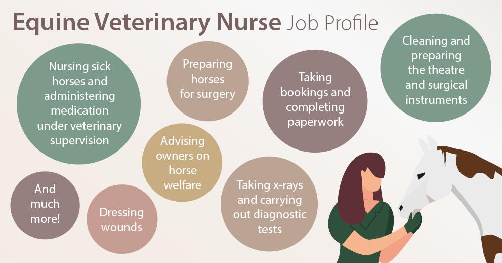 Equine Veterinary Nursing Careers Advice