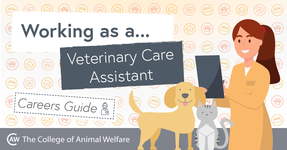 Veterinary Care Assistant Career Guide