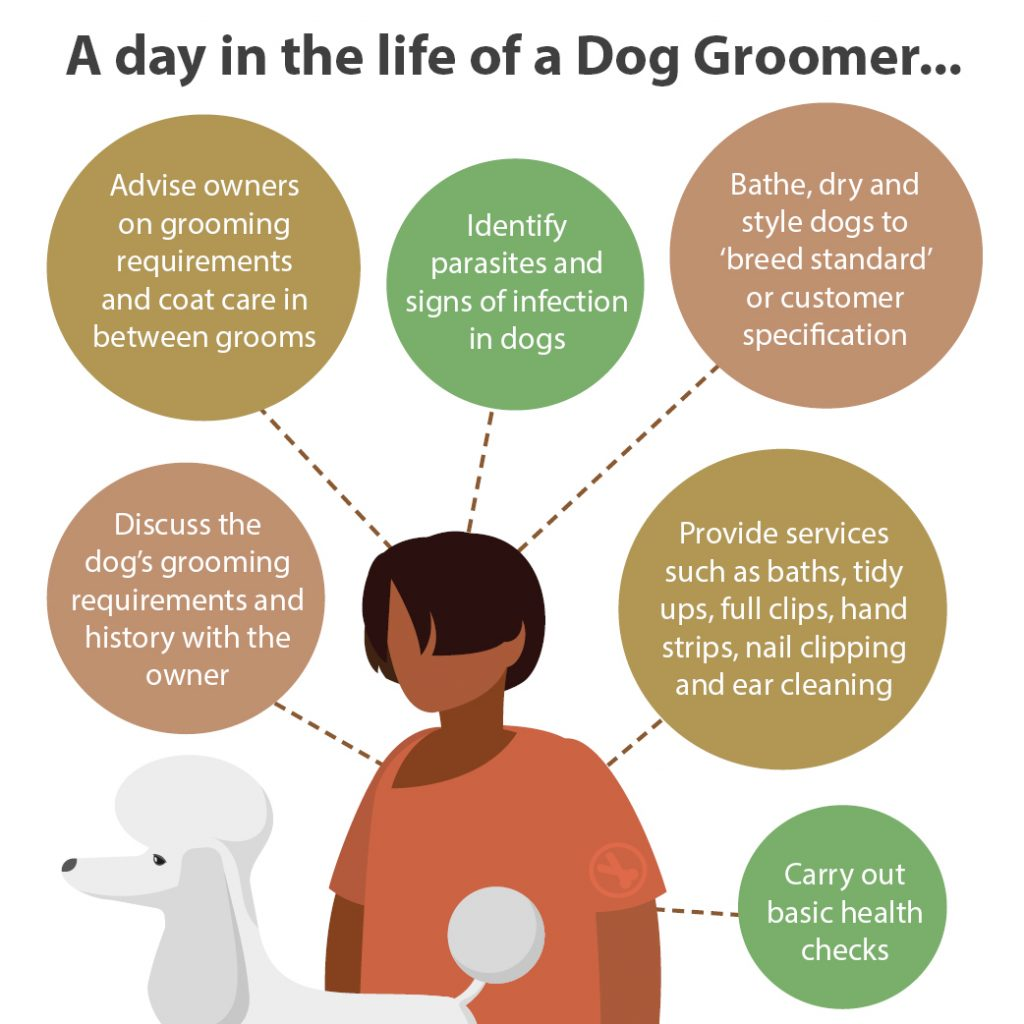 A day in the life of a dog groomer